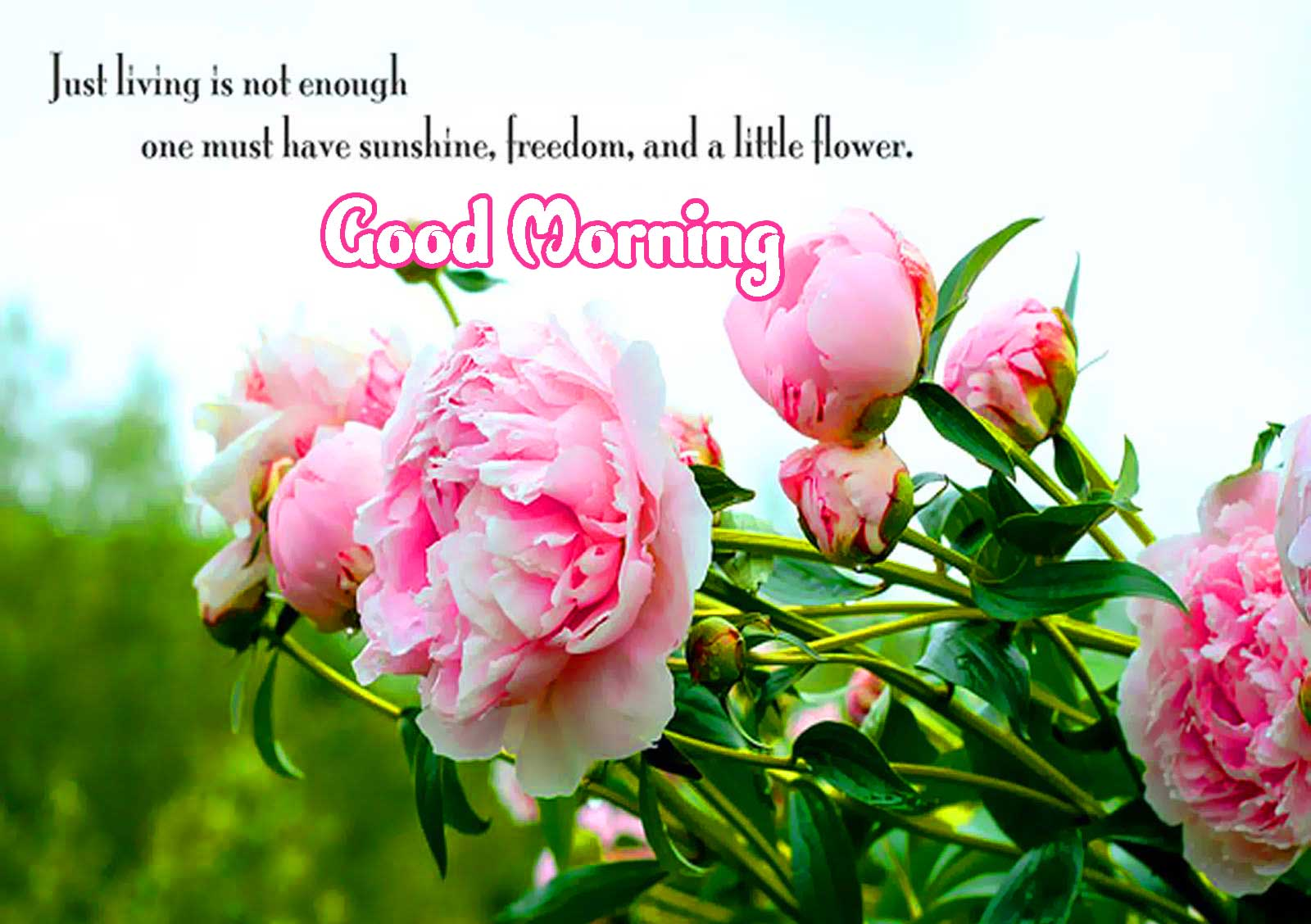 Good Morning Images for Facebook