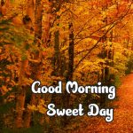 258+ Fresh Good Morning Nature Images Photo Free HD Download