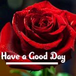 254+ New Latest Collection Of Have a Good Day Images Photo Download